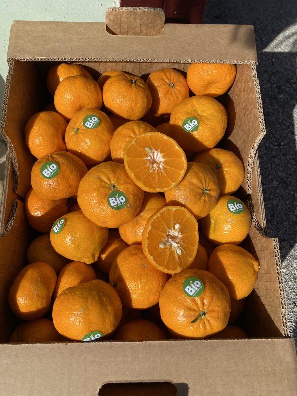 Mandarini di Siracusa BIO